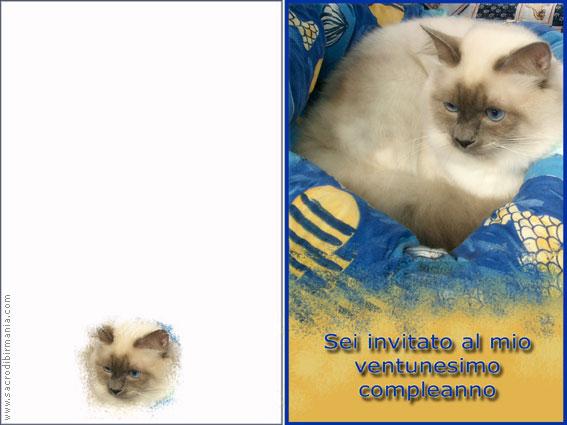 Conosciuto biglietti d'auguri con gatti - download HS91